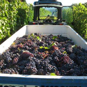 FB_Wine_Truck